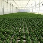 Wireless Greenhouse Monitoring and Control Data Logger Applications