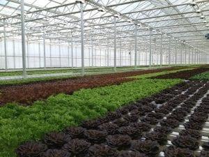 wireless-greenhouse-mapping