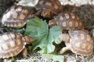 baby-tortoise-jim-friend