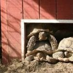 tortoise-jim-friend