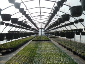 greenhouse temperature monitoring